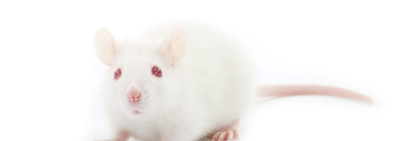 Natural Compound, Chrysophanic Acid, Seen to Ease BPH Symptoms in Rat Model